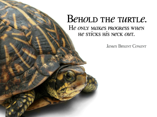Behold The Turtle - James Bryant Conant